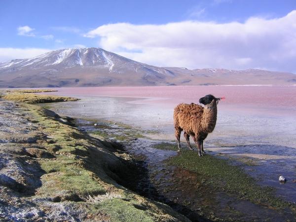 villamar-Bolivie-cb-voyages