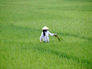 vietnam-012