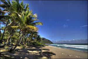 palmier-plage-reunion