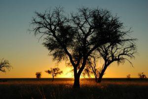 parcs-et-ethnies-namibie
