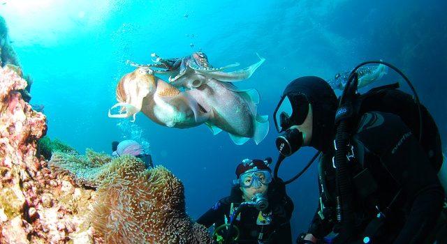 diving-689831_640